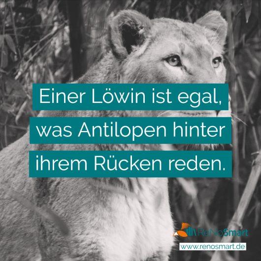 Einer Löwin ist egal, was Antilopen hinter ihrem Rücken reden.