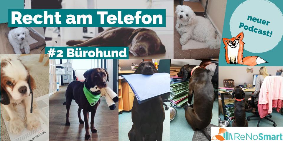 """""""Recht am Telefon"""": #2 Bürohund"""
